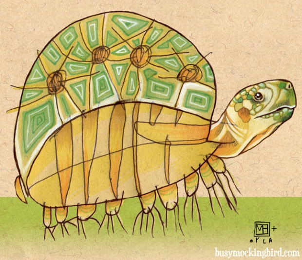 speedy turtle-e
