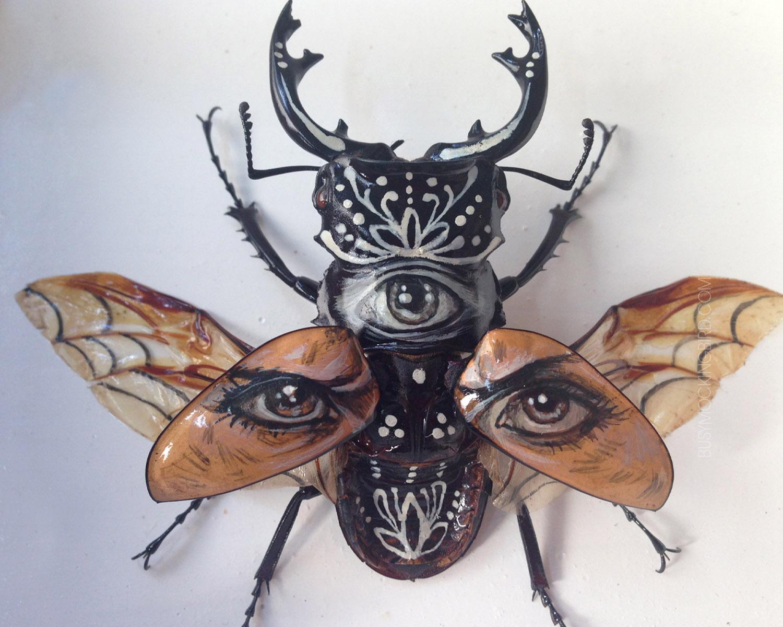 Bugs busy mockingbird eyes biocorpaavc Images